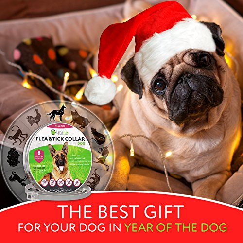 Dog-Collar-Pet-Essential-Oil-Pest-Control-Collars-Flea-and-Tick-Prevention-for-Dogs-One-Size-Fits-ALL-8-Months-Protection-Collar-with-Natural-Plant-Extracts