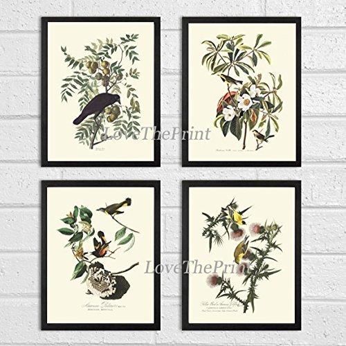 Bird Print Set of 4 Art Beautiful James Audubon Craw Bachman's Warb American Redstart Goldfinch Home Wall Room Decor Unframed