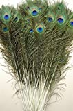 50 Pcs Peacock Feathers 25''-30''