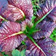 Roter Senf Red Giant - 250 Samen