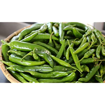Korean Long Green F1 Hybrid Hot Pepper Seeds (25 Seeds) : Garden & Outdoor