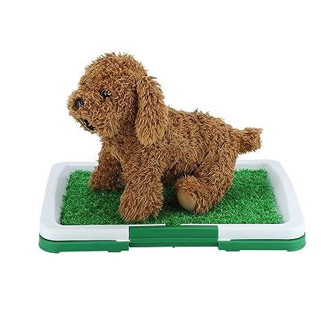 DEWIN Aseo de Mascotas - Perro Mascota for IR al baño del ...