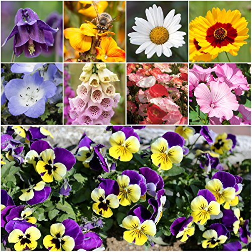 Bulk Package of 30,000 Seeds, Moist Area Wildflower Mixture (100% Pure Live Seed) Non-GMO Seeds by Seed Needs ...