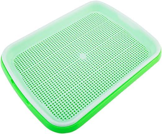 HXHON - Bandeja para Semillas de germinación sin BPA para jardín o Oficina, Verde: Amazon.es: Jardín
