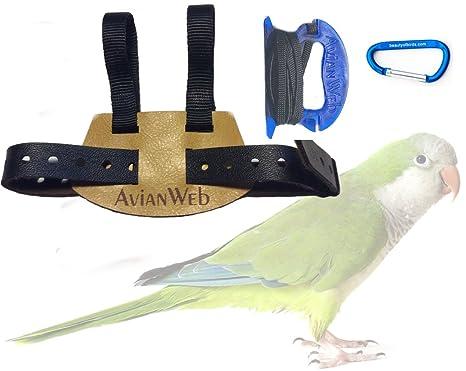 61gJrbfVixL._SX466_ amazon com avianweb ez bird harness with 6 ft leash (quaker