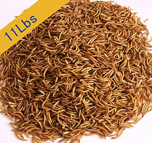 11 Lbs Top Quality Natural Organic Dried Mealworms for Chickens & Wild Birds -
