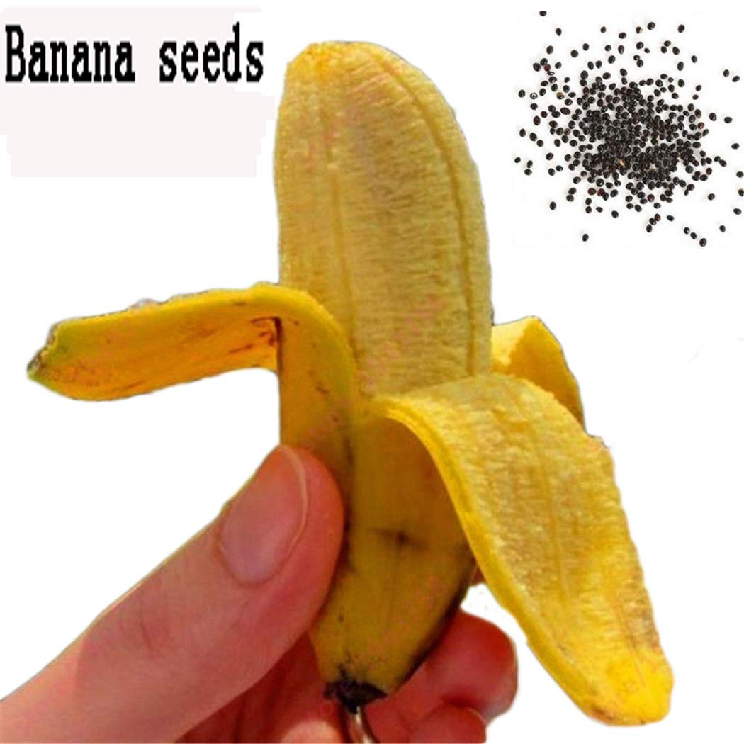 Banana Seeds Pictures