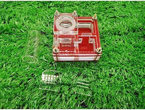 Rot Ameise Bauernhof Palme Nest Neu Rückseite Flugzeug Acryl Nest Ameise Werkstatt Haustier Ameise Reptil Terrarium (Color : Red)