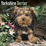 Yorkshire Terrier Puppies Calendar 2017 - Yorkie - Yorky - Dog Breed Calendars - 2016 - 2017 wall calendars - 16 Month by Avonside