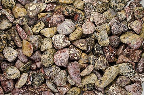Fantasia Materials: 1 lb Tumbled Leopard Skin Jasper AA Grade Stones from Brazil - Large 1