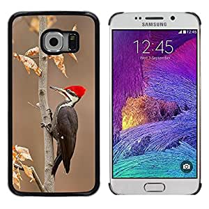Caucho caso de Shell duro de la cubierta de accesorios de protección BY RAYDREAMMM - Samsung Galaxy S6 EDGE SM-G925 - Beak Autumn Winter