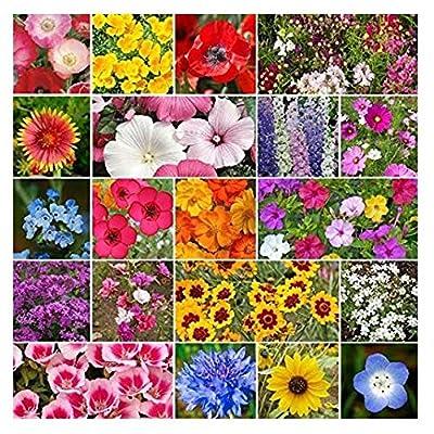 David's Garden Seeds Wildflower All Annual Seed Mix GS1113 (Multi) 500 Non-GMO, Open Pollinated Seeds : Garden & Outdoor