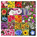 David's Garden Seeds Wildflower All Annual Seed Mix DGS111OPE (Multi) 500 Open Pollinated Seeds