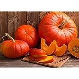 Cinderella pumpkin 10 seeds *Rouge Vif d'Etampes* Heirloom *Non GMO* CombSH G16