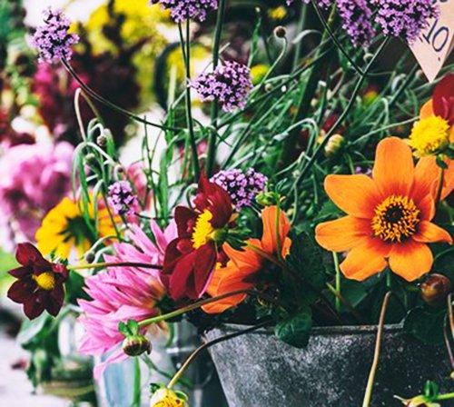 [10,000 All Perennial Wildflower Seeds] (Planting Spring Flowers)