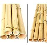 bambus-discount.com Bambusrohr gelb, Moso Bambus, gebleicht, Durch. 4,8-6cm, Länge 150cm
