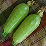 buy Courgette - Clarion - 15 Seeds now, new 2018-2017 bestseller, review and Photo, best price $1.39