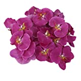 20x Flor Orquídea Artificial de Pelo Muñeca Decoración de Boda (púrpura)