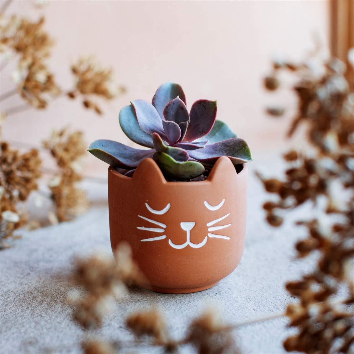 Sass Belle Mini Cat S Whiskers Terracotta Planter Everything Else