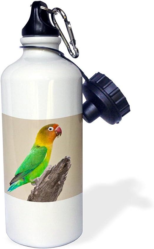 3dRose wb/_7362/_1 Timmy Turtle Sports Water Bottle 21 oz White