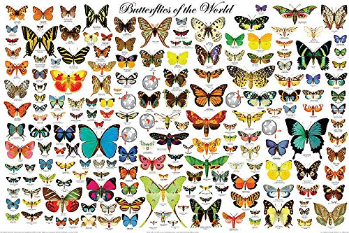 Butterfly Large Poster - The Butterflies of the World Educational Science Classroom Chart Print Poster 24x36