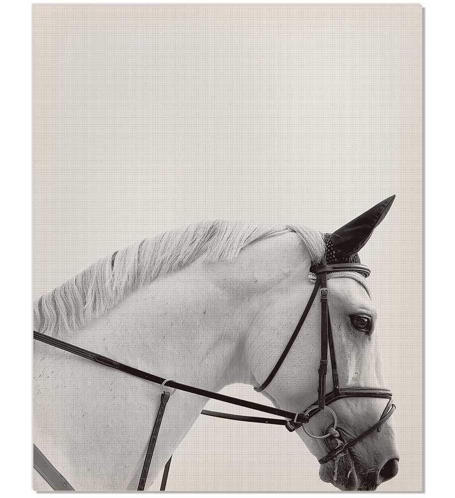 Horse Art, Horse Print, Black and White, Horse poster, Horse Nursery, Southwestern poster, Horse art Print, Horse Photography, Horse Wall Print, Black and White Horse Art, 8x10