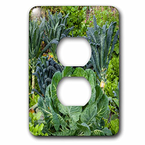 3dRose Danita Delimont - food - Cabbage and kale in a neighborhood garden - Light Switch Covers - 2 plug outlet cover - Mcallen Outlets