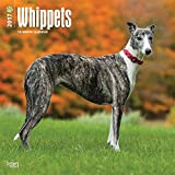 Whippets - 2017 Calendar 12 x 12in