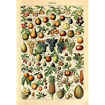 Amazon Com Vintage Poster Print Art Fruits Identification Reference