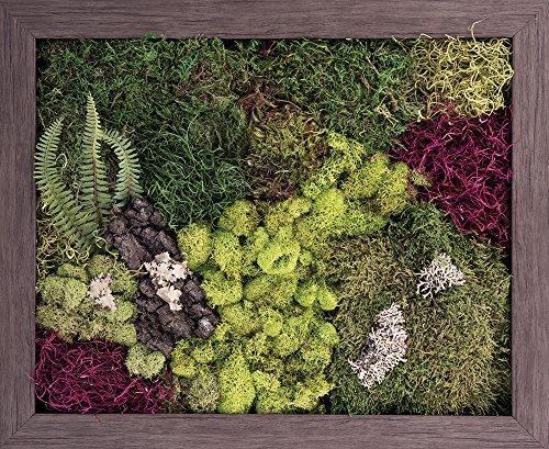 Carpentree 19''x23'' Velvet Garden-Biophilic Framed Art by Carpentree