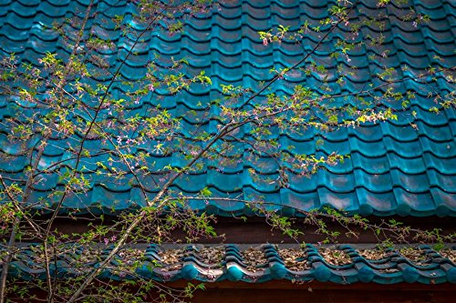 20x30-in-black-wood-greg-dyro-blue-tile-roof