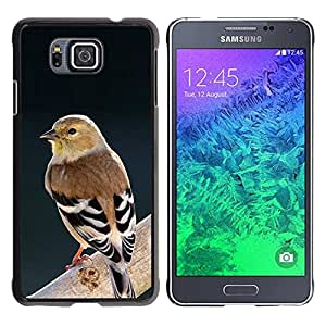 TopCaseStore / la caja del caucho duro de la cubierta de protección de la piel - Spring Bird Branch - Samsung GALAXY ALPHA G850