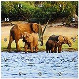 3dRose dpp_131440_1 African Elephant, Chobe National Park, Botswana-Af05 Mgl0003-Miva Stock Wall Clock, 10 by 10-Inch