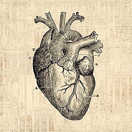 Amazon heart diagram art antique wall art medical anatomy home heart diagram art antique wall art medical anatomy home decor vintage print with vintage script paper ccuart Image collections