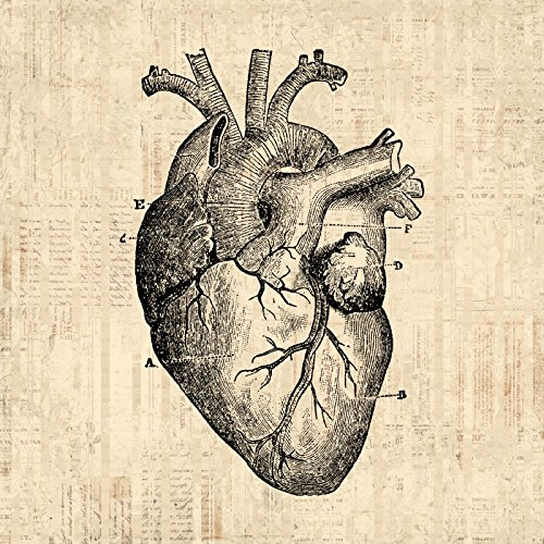 Antique Heart Print with a Vintage Heart Illustration Medical Wall Art Anatomy Themed Poster