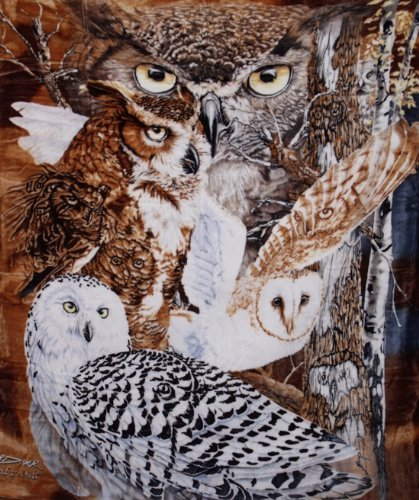 Crover 48-XE73-WTUQ 11 Owls Super Soft Plush Queen Size Blanket By Gardner Multicolor