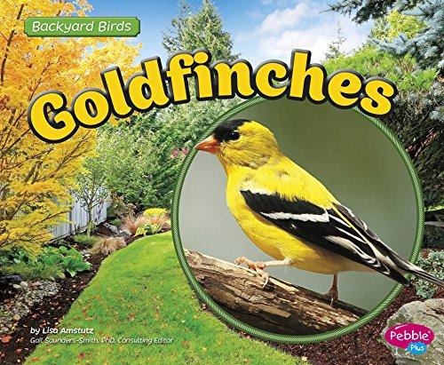 Goldfinches (Backyard Birds) (Goldfinch Bird Animal)