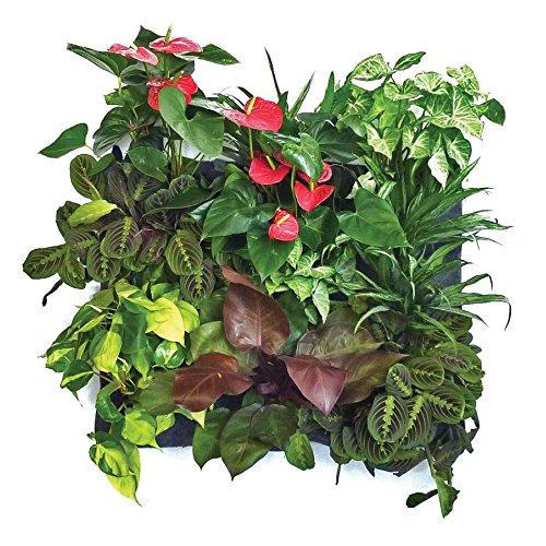 Florafelt 12-pocket Vertical Garden Planter by Florafelt (Image #4)