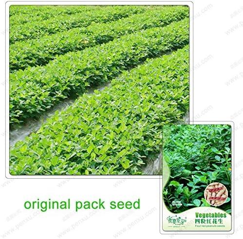 12 semillas / pack, semillas Cuatro cacahuetes, cacahuates, cacahuetes Cuatro rojas, semillas de hortalizas balcón: Amazon.es: Jardín