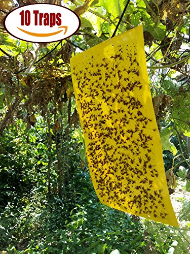 ALLMILL 10-Pack Dual-Sided Yellow Sticky Traps for Flying Plant Insect Like Fungus Gnats, Aphids, Whiteflies, Leafminers,Leaf Miners - (10x7 Inches, Twist Ties Included)