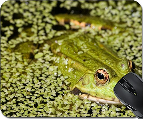 Iris Frogs (MSD Natural Rubber Mousepad Mouse Pads/Mat design: 583722 Close up of a frog on a lake)
