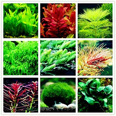 Aquarium Plant Mix Seeds Water Grasses Aquatic Plant Grass Fish Indoor 100 PCS : Garden & Outdoor