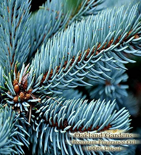 BLUE SPRUCE Fragrance Oil & Essential Oil Blend - 100% UNCUT - Sophisticated blended with pine and cedarwood essential oils - BULK Fragrance Oil By Oakland Gardens (030 mL - 1.0 fl oz Bottle) (Spruce Cedar Top)
