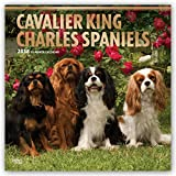 Cavalier King Charles Spaniels 2018 12 x 12 Inch Monthly Square Wall Calendar with Foil Stamped Cover, Animals Dog Breeds Puppies (Multilingual Edition)