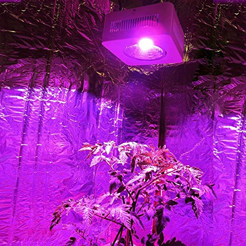 Light Spectrum Hydroponic Indoor Plant