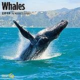 Whales 2019 Wall Calendar