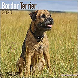 Border Terrier Calendar - Dog Breed Calendars - 2019 - 2020 Wall
