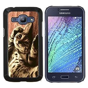 LECELL--Funda protectora / Cubierta / Piel For Samsung Galaxy J1 J100 -- Gato de Bengala Serengeti Ocicat Savannah --