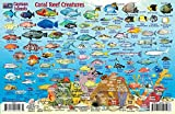 Cayman Islands Dive Map & Reef Creatures Guide Franko Maps Laminated Fish Card