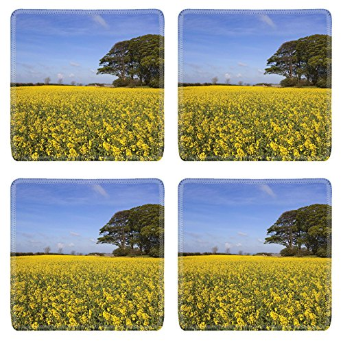 MSD Square Coasters Non-Slip Natural Rubber Desk Coasters design 20017214 a grove of trees growing on an ancient prehistoric burial mound surrounded by golden canola flowers under a hazy blue spr (Tree Flower 1 2 Mound)